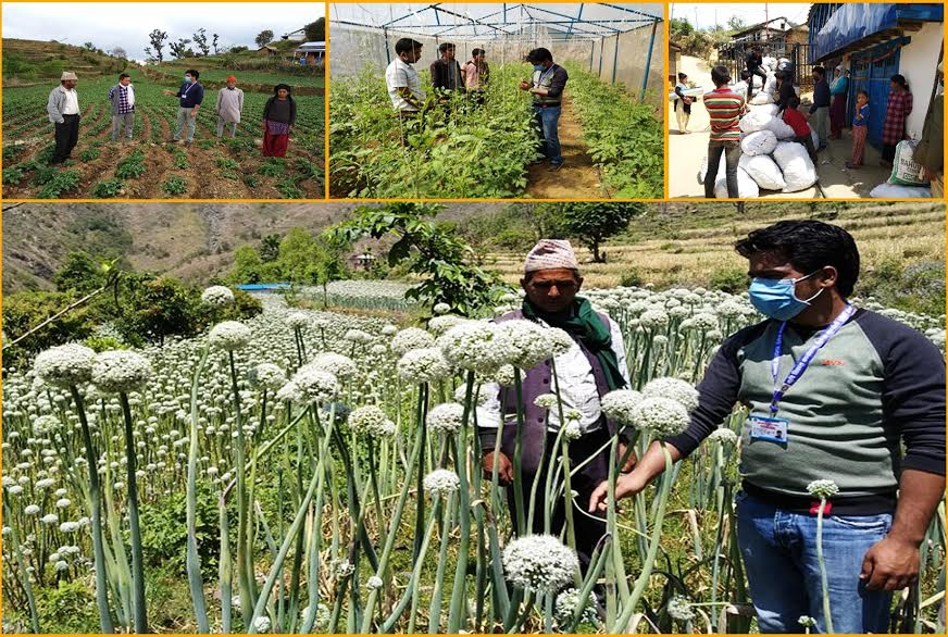 लकडाउनमा कृषि कार्यालयको सक्रियता